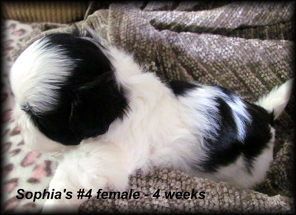 Sophia's #4 female 4 weeks.JPG