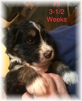Abby #3 3.5 weeks.jpg