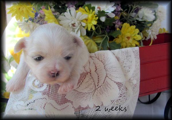 Sophia's #1 fe 2 weeks.JPG
