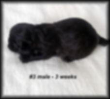 Sophia's 3 weeks 005.JPG