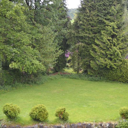back lawn.JPG