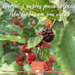 Amoras, 5 razões para colocar esta fruta em sua vida!