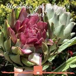 Alcachofra, seus mistérios e sabores