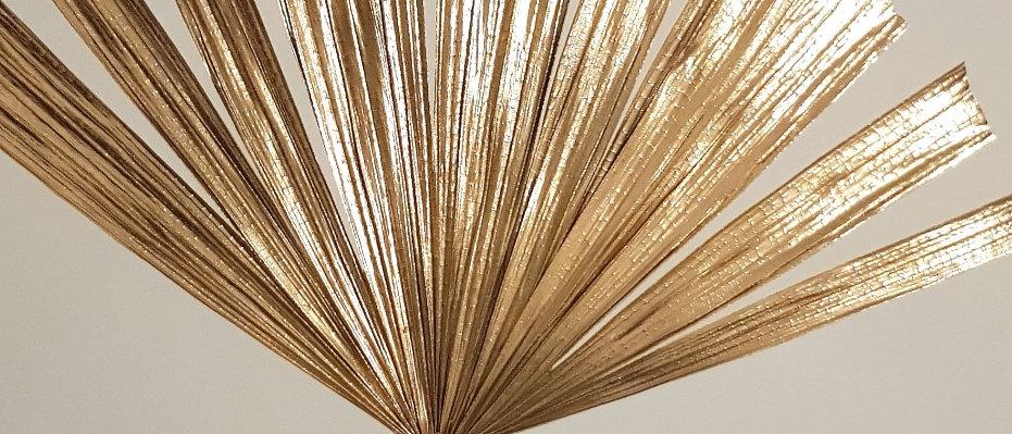 Dried gold fan palm