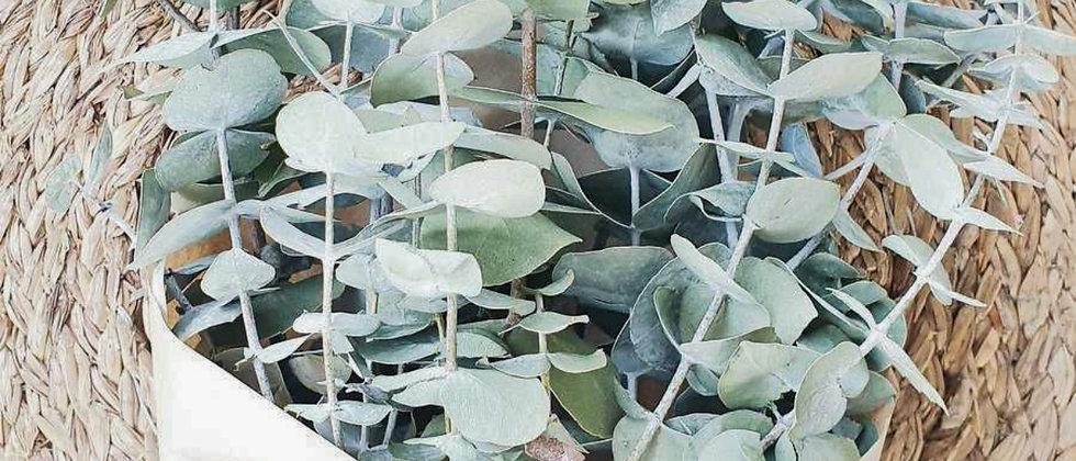 Dried Eucalyptus Bunch-dark green