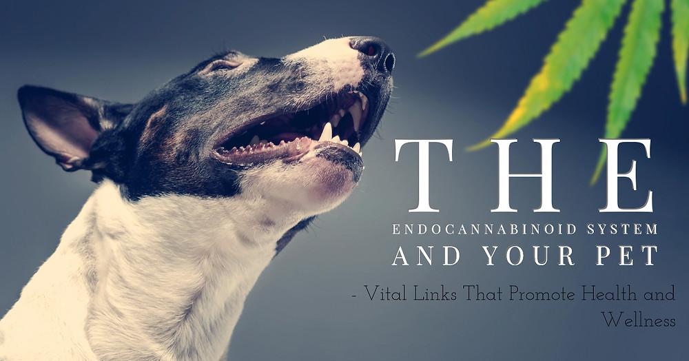 pets endocannabinoid system
