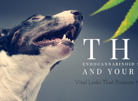Why Does CBD Oil For Dogs Work? It All Starts With Your Animals Endocannabinoid System.