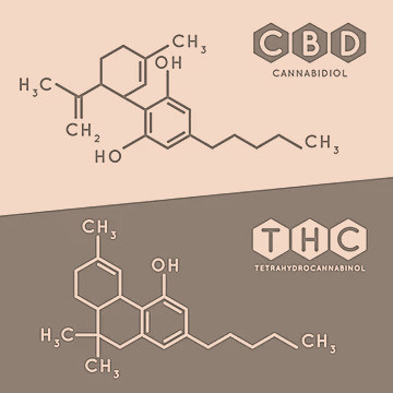 How does CBD manage pain?