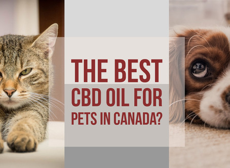 The Best CBD Oil For Dogs in Canada, Are CBD Oils Or CBD Dog Treats Better?