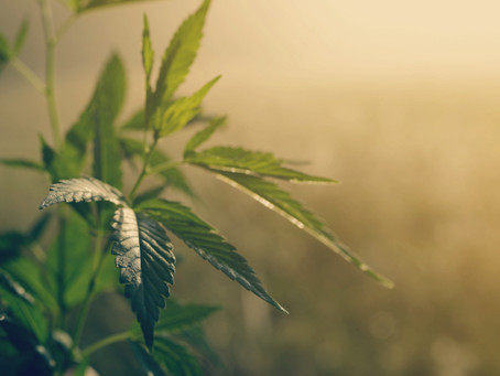 What makes Hemp Derived CBD Oil Different From Hemp Seed Oil.