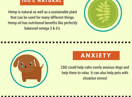Reasons People Use Hemp Products for Pets!