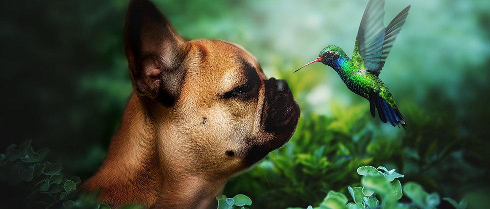 fotografia mascotas bogota.jpg