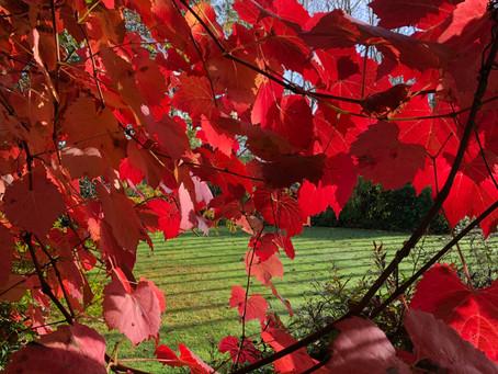 The Good Life: Autumn fall