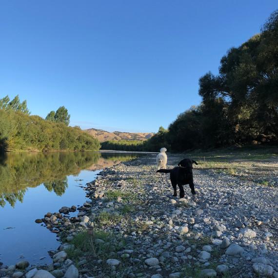Ruamahanga River, late summer.