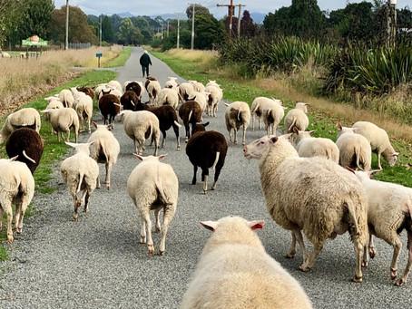 The Good Life: Lamb-demonium
