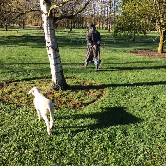 A man and his lamb go for a morning walk. PJs and dressing gown model's own.
