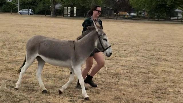 Lush Movie: Donkey business