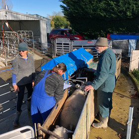 Miles the sheep farmer (right) having the pregnant ewes scanned to see how many lambs each is having.