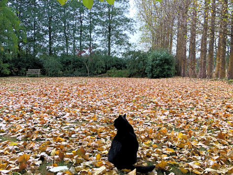 Lush Pictures: Autumn leaves