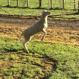 Prancer or Dancer, we're not sure which.