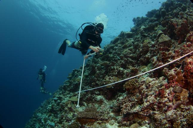 Bleaching Response Trip to Palmyra Atoll