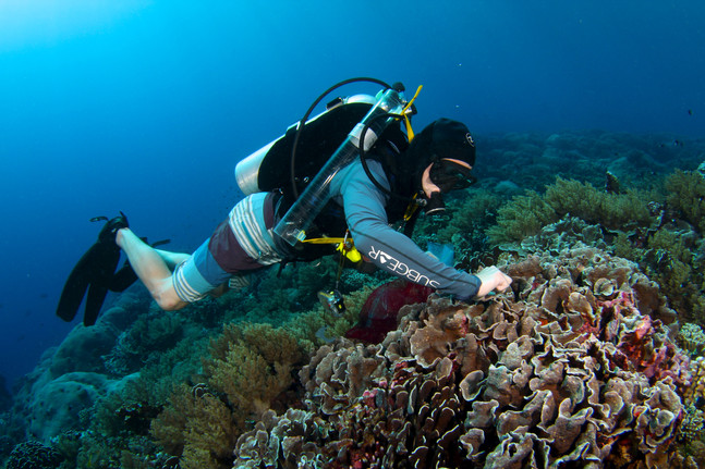 Food availability is important for corals - new paper out in Current Biology