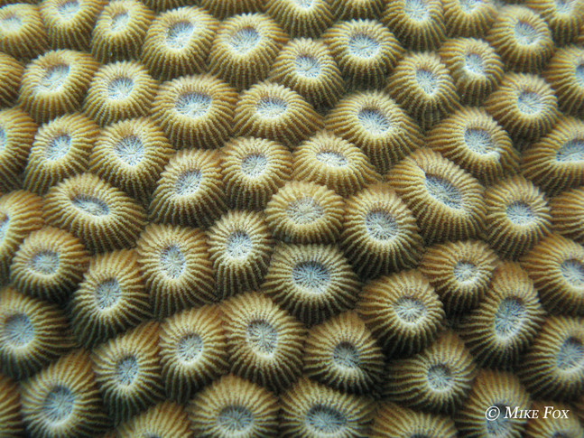 New Paper - Estimating coral heterotrophy with compound specific stable isotope analysis