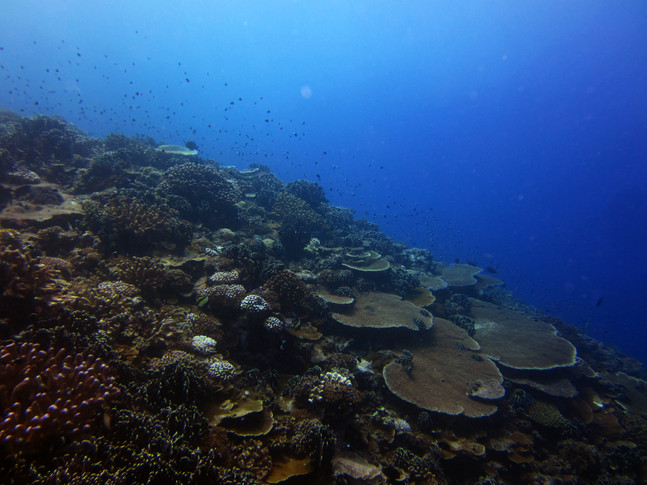 Tracking coral feeding from space