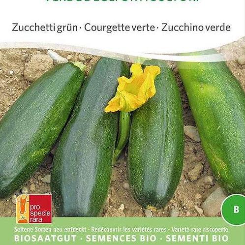 Zucchetti Verte de Maraicher