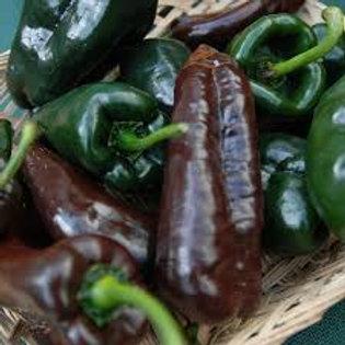 Chili mulato isleno