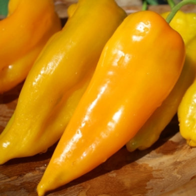 Pepper Golden treasure