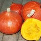 Oranger Knirps