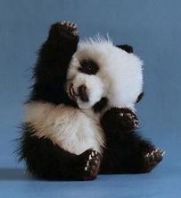 small panda.jpg