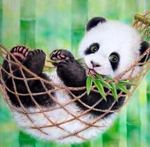 panda in hammock.png