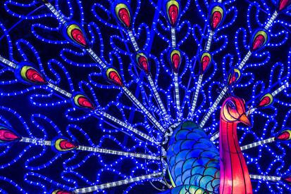 chiswick-lantern-festival.jpg