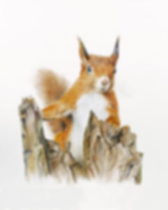 Jan Taylor squirrel 2.jpg