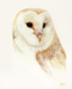 Jan Taylor barn owl 300 for 8 x 10.jpg