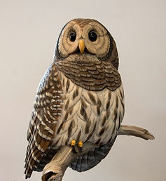 Barred Owl by Mark Midder Masters.jpg