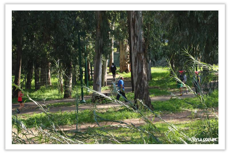 אנשים צועדים על השביל, בין עצים