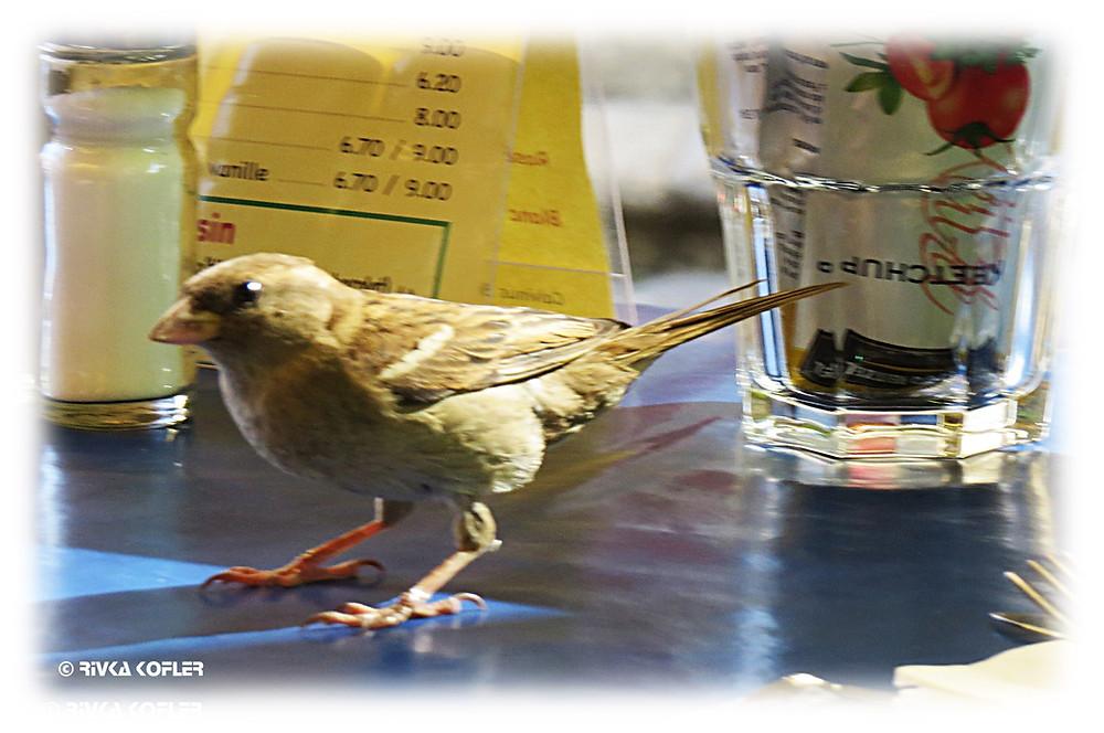 ציפור על שולחן
