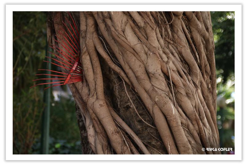 עץ מפוסל
