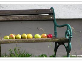 ממה עשוי התפוח?