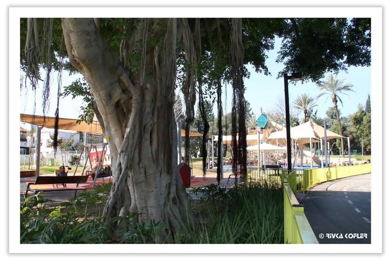 עץ פיקוס, גן שעשועים