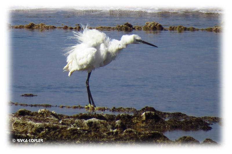 ציפור בעלת מקור ארוך