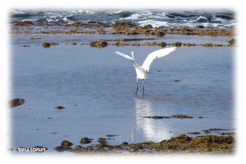 ציפור פורשת כנפיים