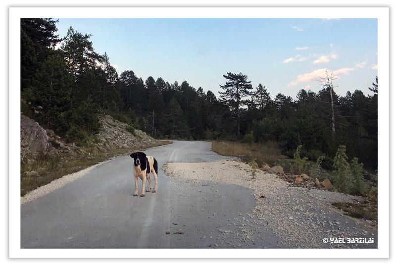 כלב, כבישי אפירוס