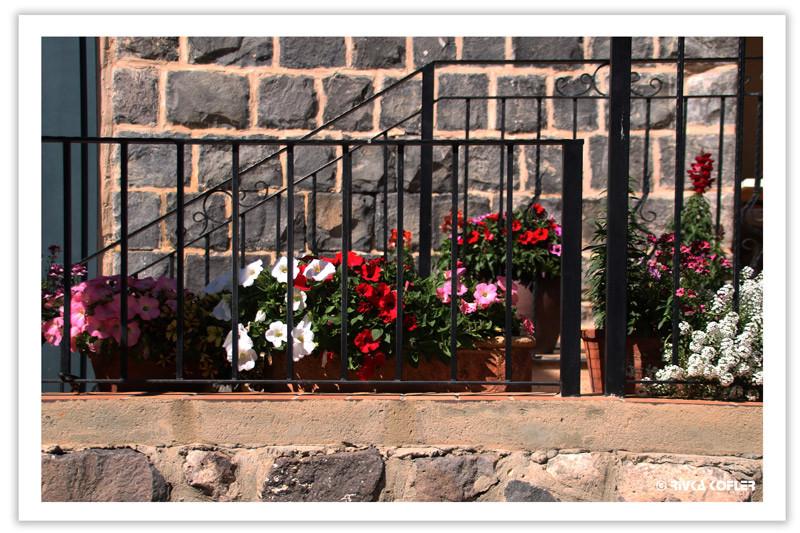 טבריה - פרחים על המרפסת