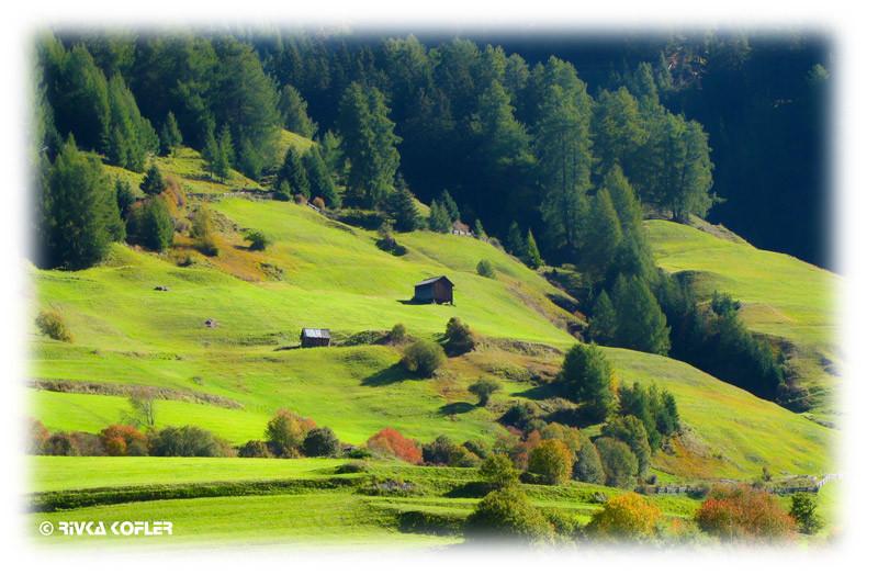 שדות ירוקים