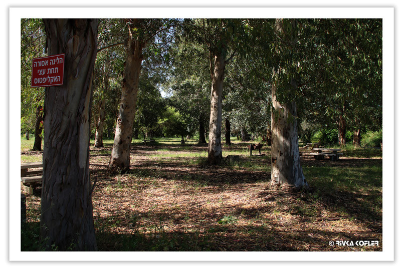 עצים בפארק הירדן