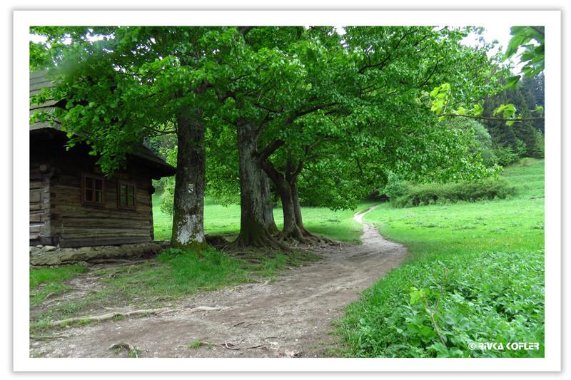 צריף, עצים, שביל הליכה